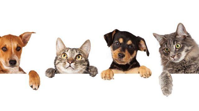 Evoluzione giurisprudenziale del danno non patromoniale per danno da lesioni o perdita del animale di affezione.